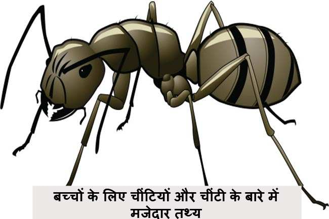 Ant in hindi