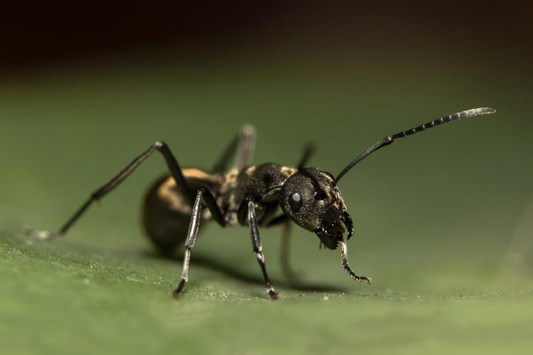 Interesting fact about small looking ants