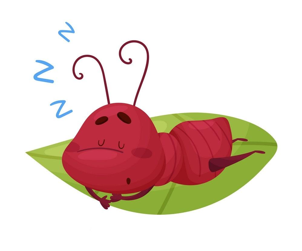 Ant sleeping
