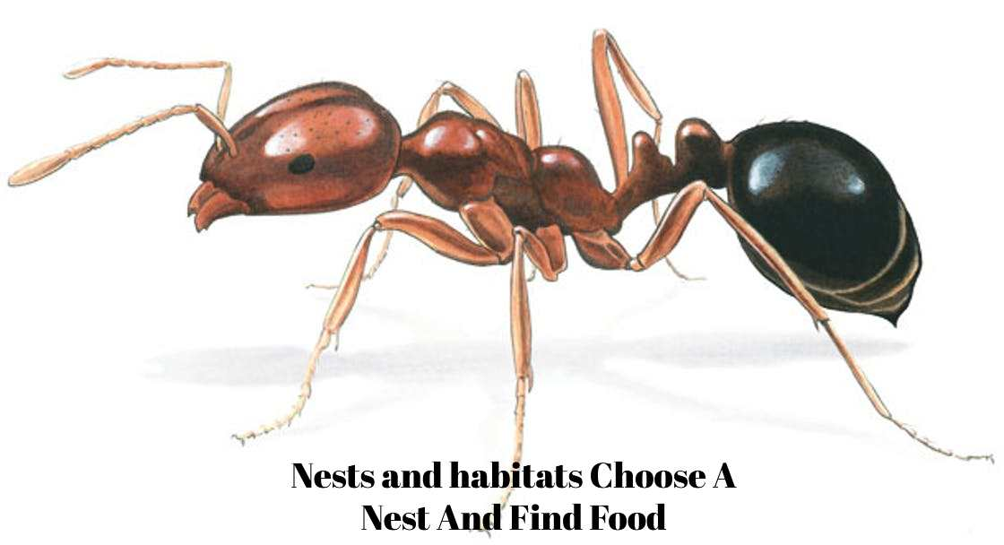 Nests and habitats Choose A Nest And Find Food
