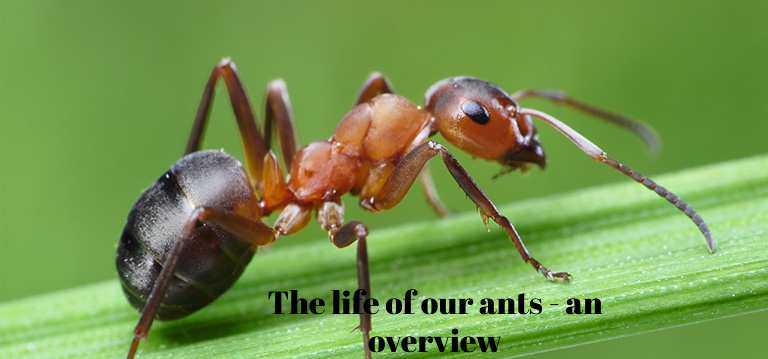 The life of our ants - an overview