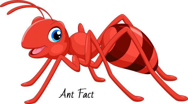 ant fact
