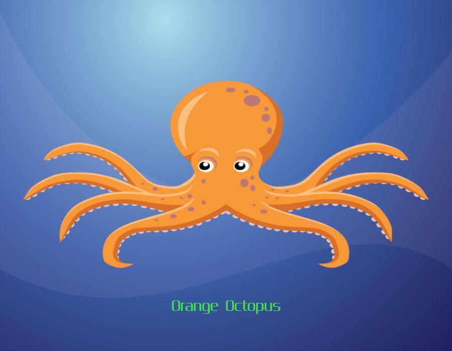 Orange Octopus