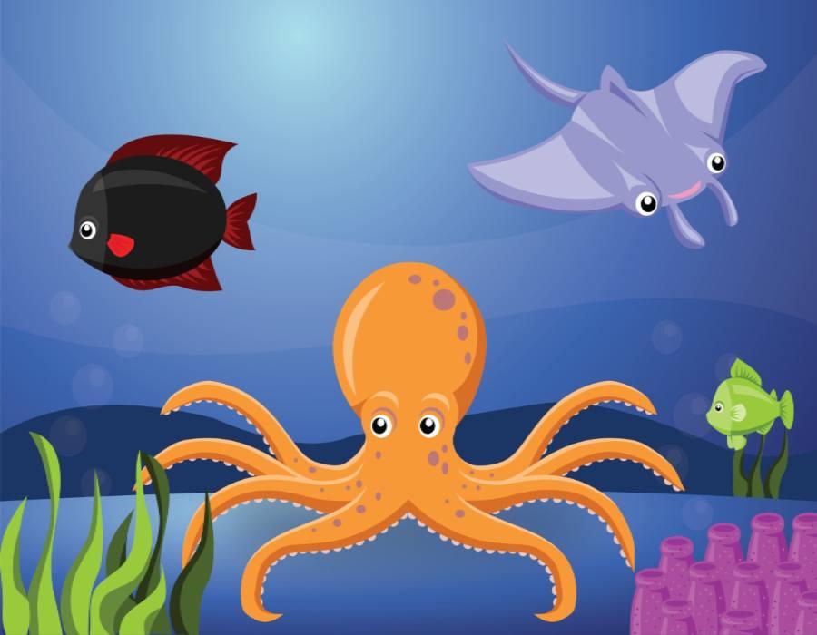 Orange Octopus Popular In Marine Research