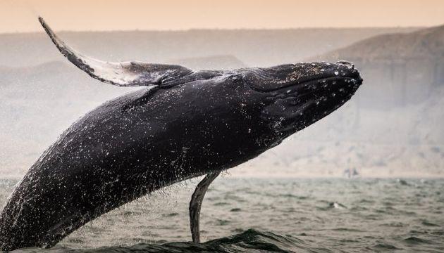 Sea Life In Peru