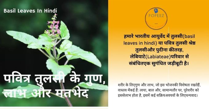 Basil Leaves In Hindi