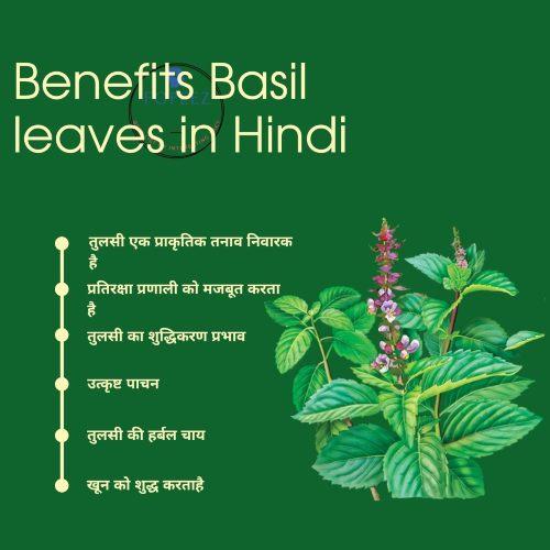 Benefits Basil leaves in Hindi