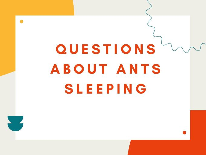 Questions About Ants