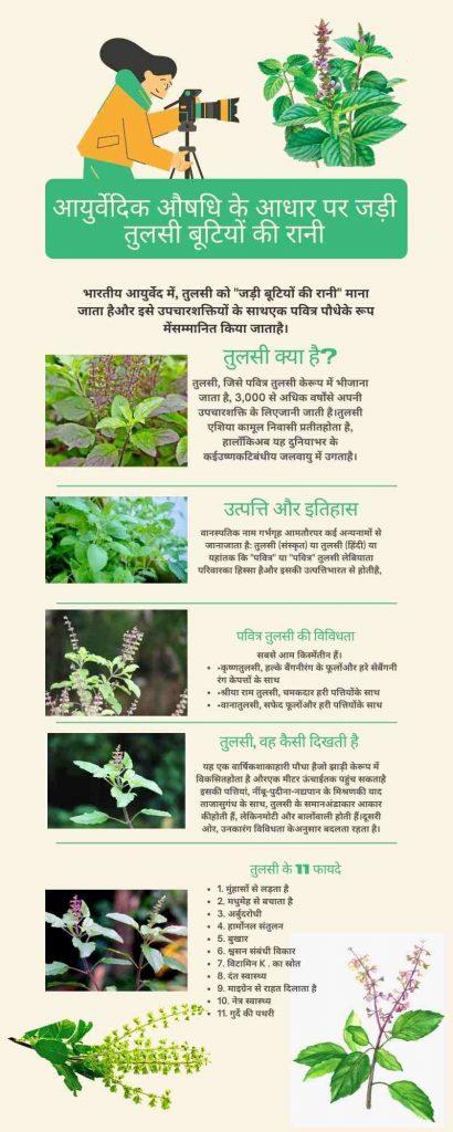 Basil in Hindi Infographic