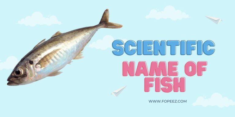 Scientific Name of Fish